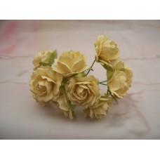 Paper Roses Cream PK10