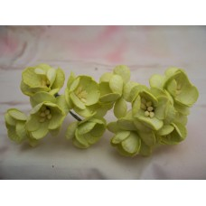 Lime Green Cherry Blossom Flowers PK5