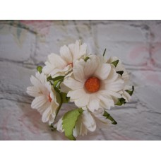 Daisy White Pack of 10