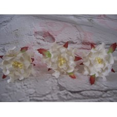 Gardenias White Pack Of 5