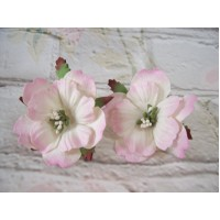 Paper Peonies Pink and white Pack Of 5