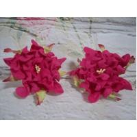 Gardenia Bright Pink 6 cm Pack of 5