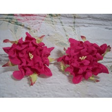 Gardenia Bright Pink 6 cm Pack of 5